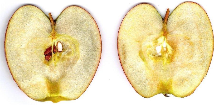 사과 갈변 방지하는 7가지 방법 중 가장 좋은 방법