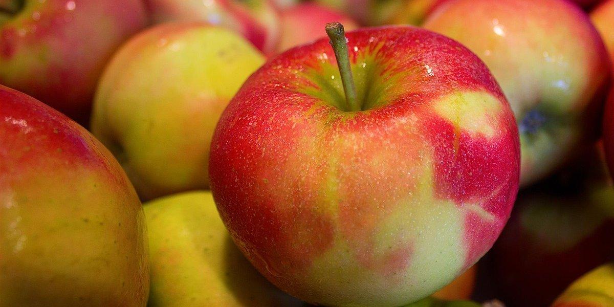 사과씨 독성 치사량? 걱정하지 마세요
