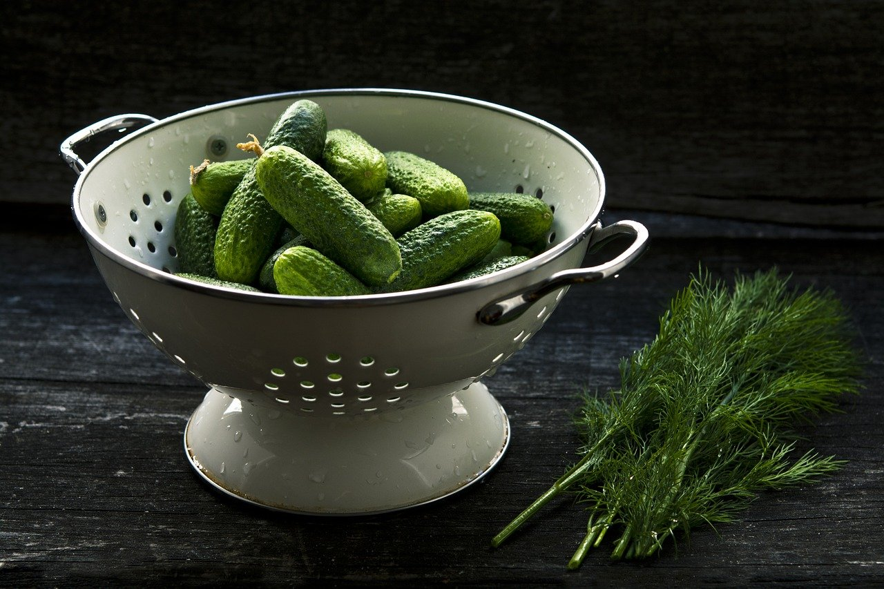 오이는 채소인가 과일인가?