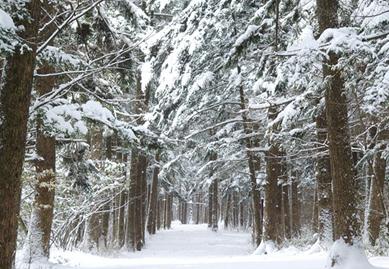 내소사 전나무 숲길
